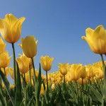 Winter Bulbs: 5 Bulbs for Fall Planting | gardenswag