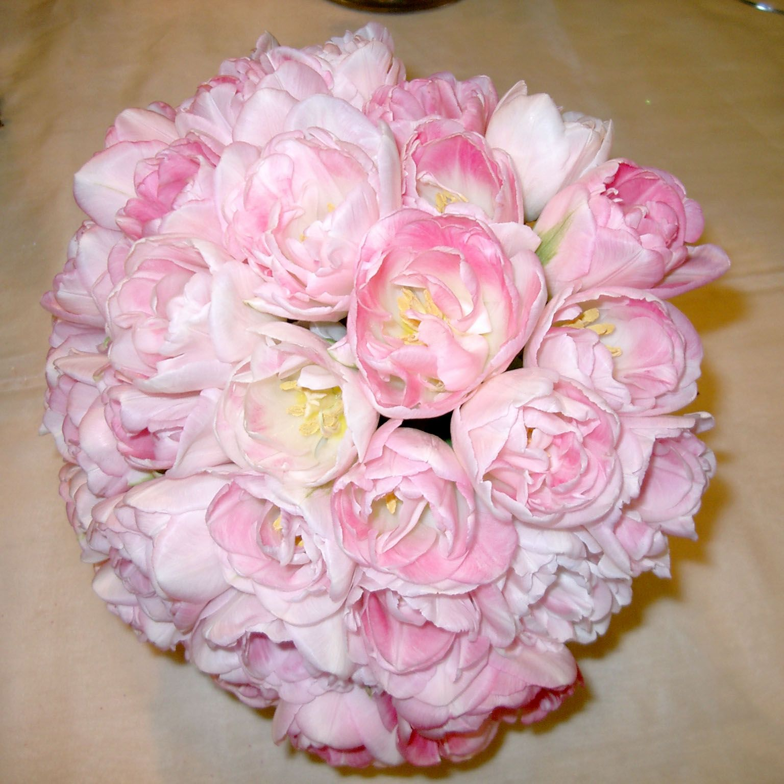 Spring bridal bouquet of double petaled pale pink Angelique tulips ...