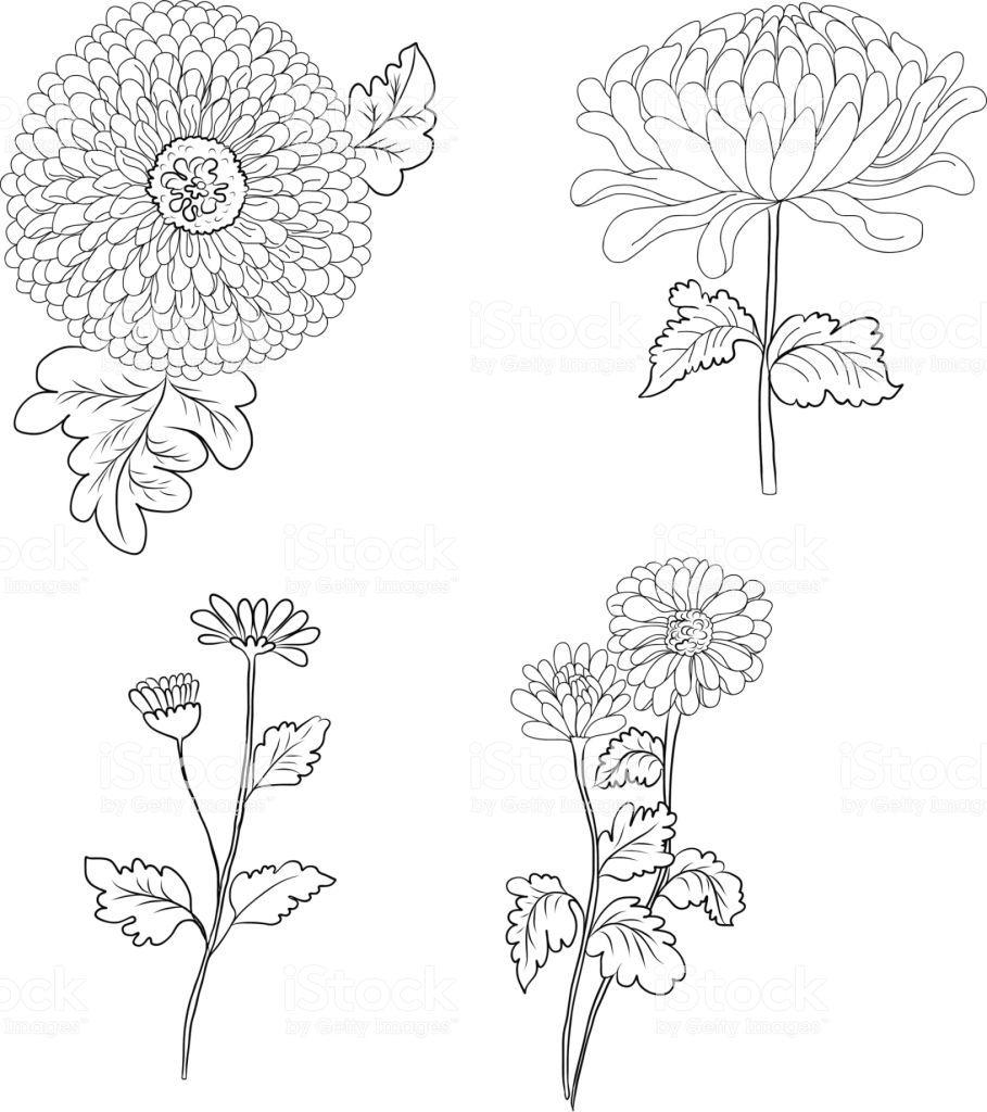 Hand Drawn Chrysanthemum Flower Doodle Style Chrysanthemum Flower Chrysanthemum Drawing How To Draw Hands