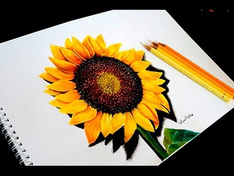 Drawing Sunflower With Colored Pencils Timelapse Faber Castell Pol Sunflower Drawing Sunflower Colors Colored Pencil Techniques