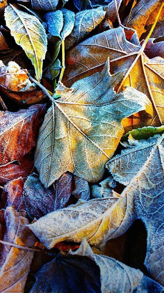 Pin by Солнечный Ветер on Красота природы Wallpaper