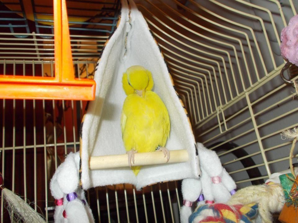 Pin by Carmel Grace on DIY Parrot toys | Pinterest & Pin by Carmel Grace on DIY Parrot toys | Pinterest | Parrots ...