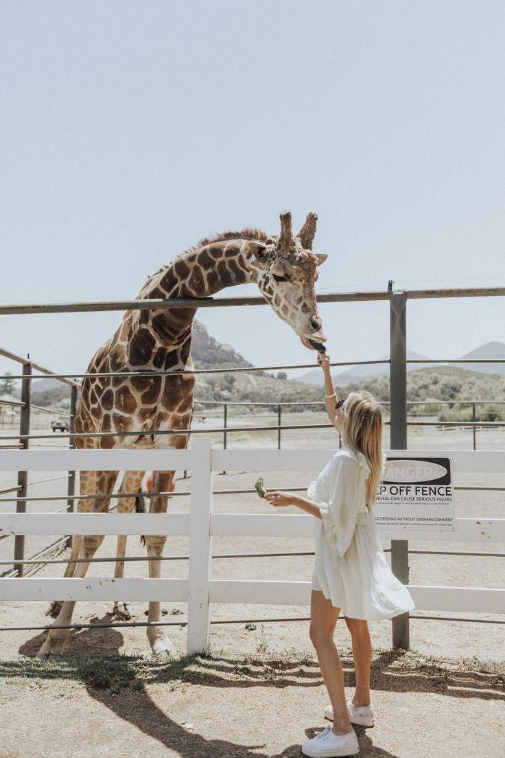 Photo of Malibu Wine Safaris: Summer in LA » Hustle + Halcyon