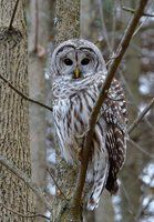 Waiting Patiently by *CanadianRy on deviantART
