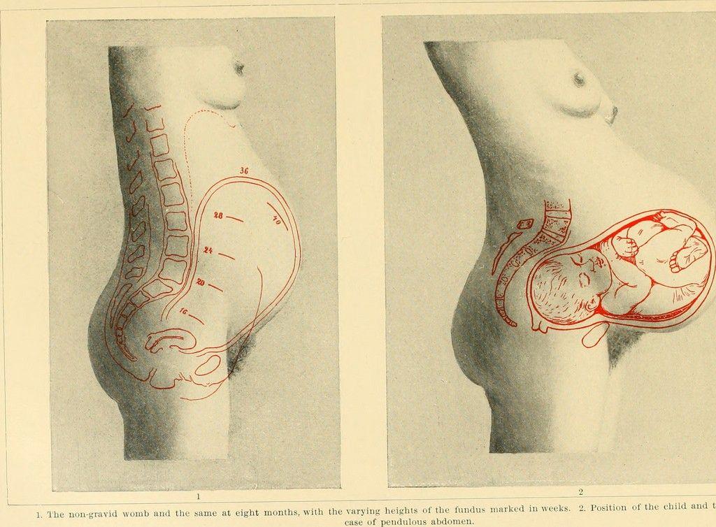 Cambios en la anatomía durante el embarazo | Pilates Embarazadas ...