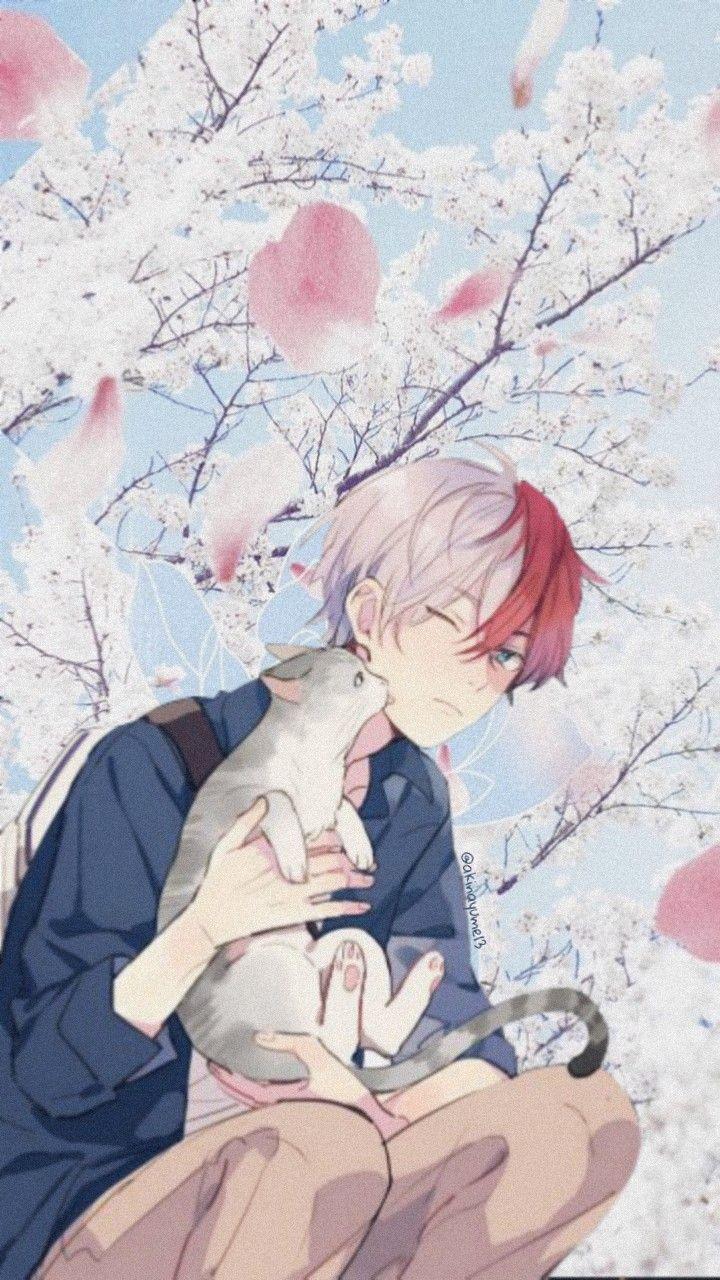 #bokunoheroacademia #bnha #myheroacademia #todorokishouto #todoroki #cat #anime #animeboy #animewallpaper #iphonewallpaper #wallpaper