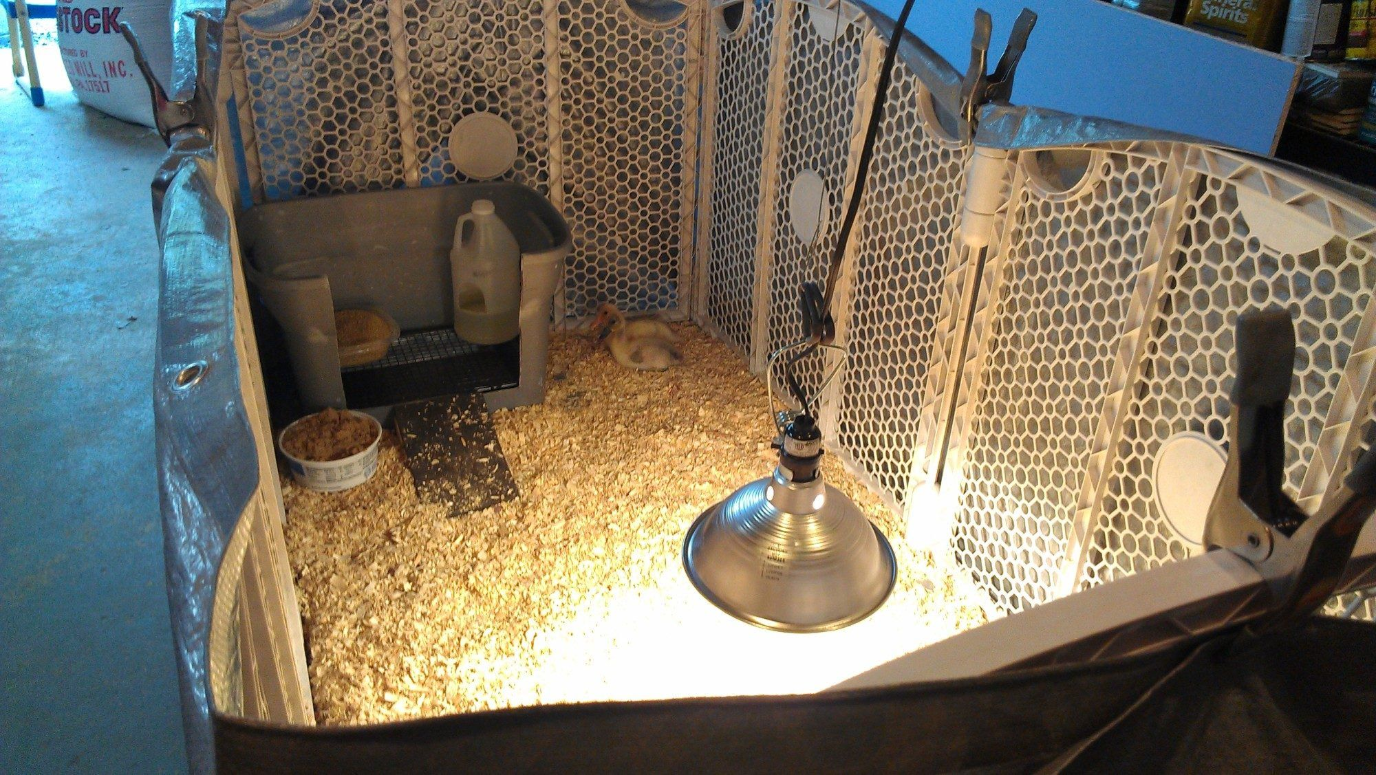Duckling care brooder ideas duckling care chickens
