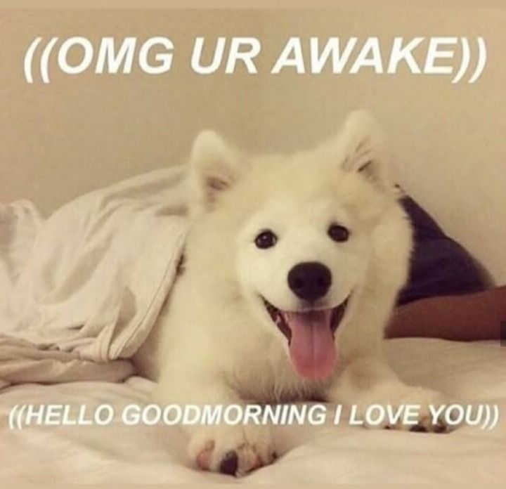 Pin By Agata Grimalkin On Wholesome Memes Cute Memes Cute Love Memes Funny Relatable Memes