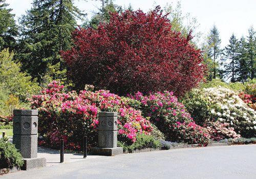 Azalea City Park In Brookings Oregon Travel Things To Do Plants