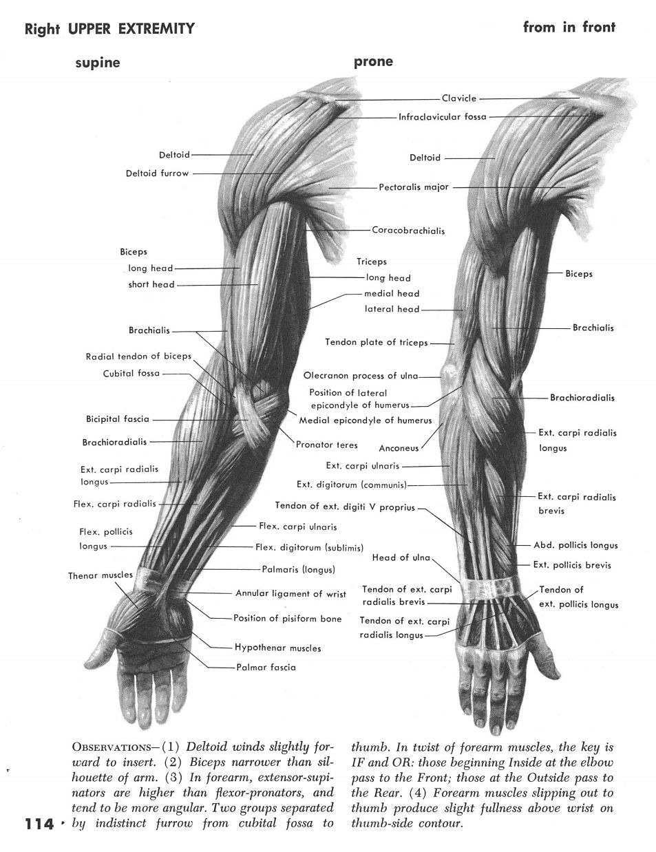 Right Arm Front 2   Anatomy   Pinterest   Arms and Anatomy