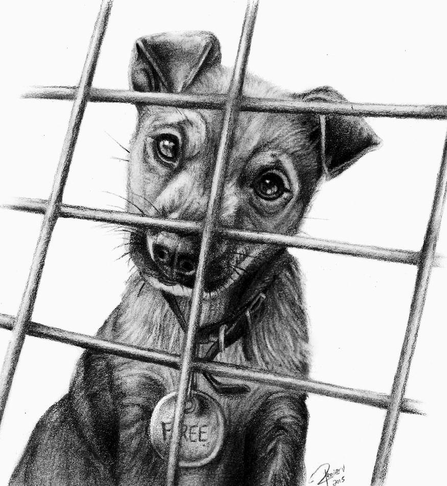 Perrito, por Renier A Vivas en animales | Dibujando.net #temática-general #animales #tradicional #realista #lápiz