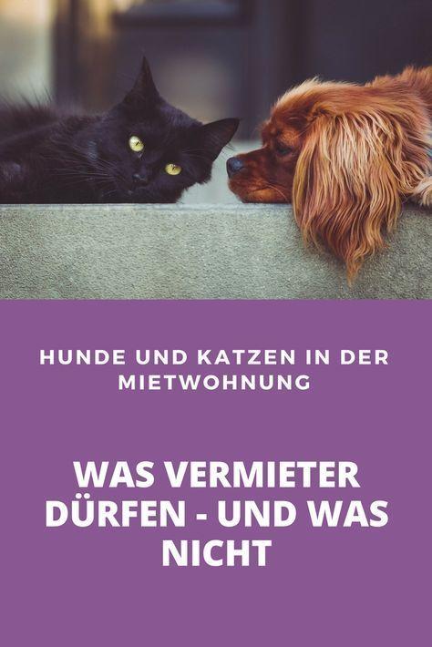Präzedenzfall in Köln Vermieter dürfen Hunde und Katzen
