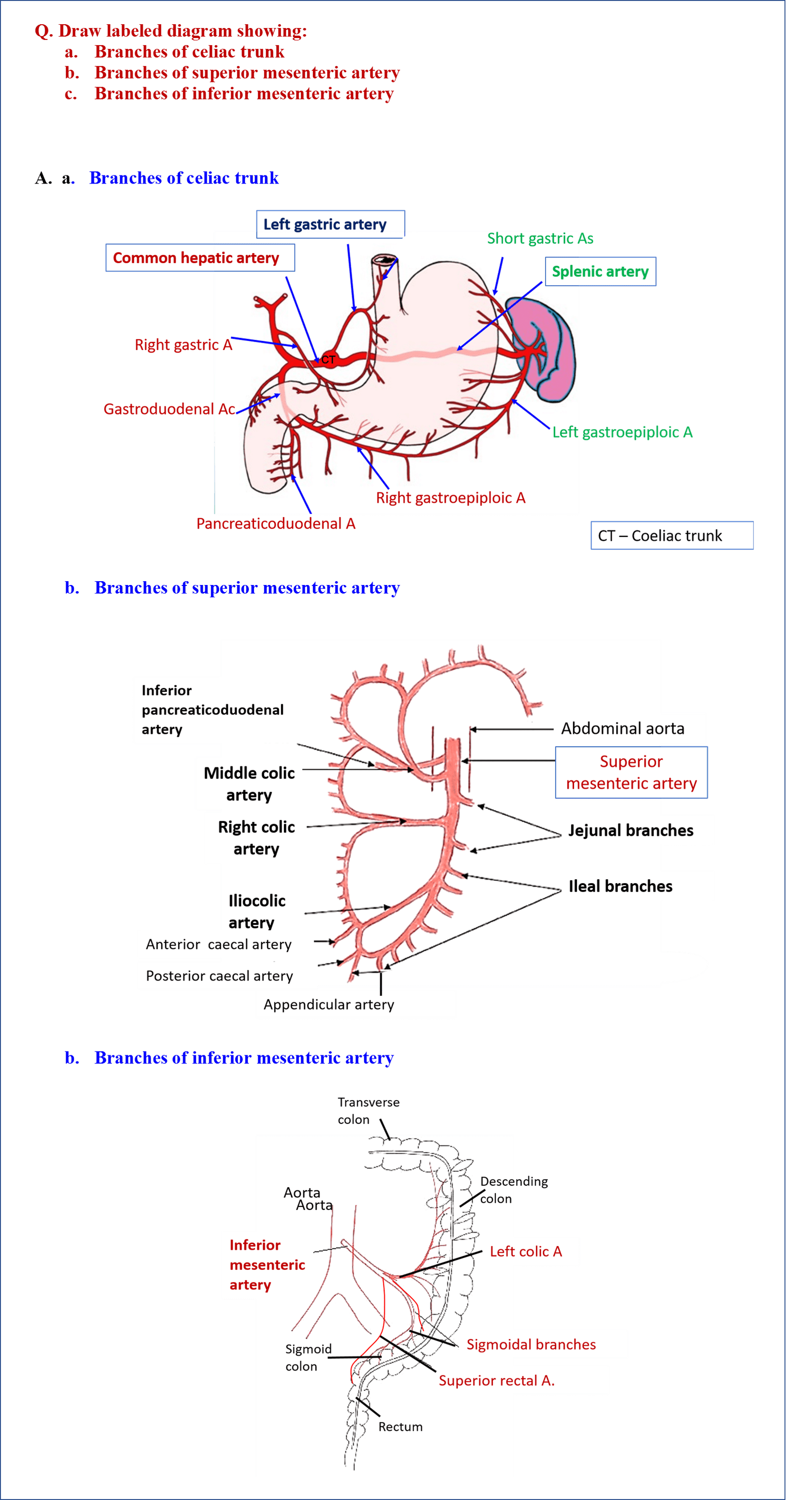 Diagram Showing Branches of Coeliac trunk, Superior and Inferior Mesenteric Arteries