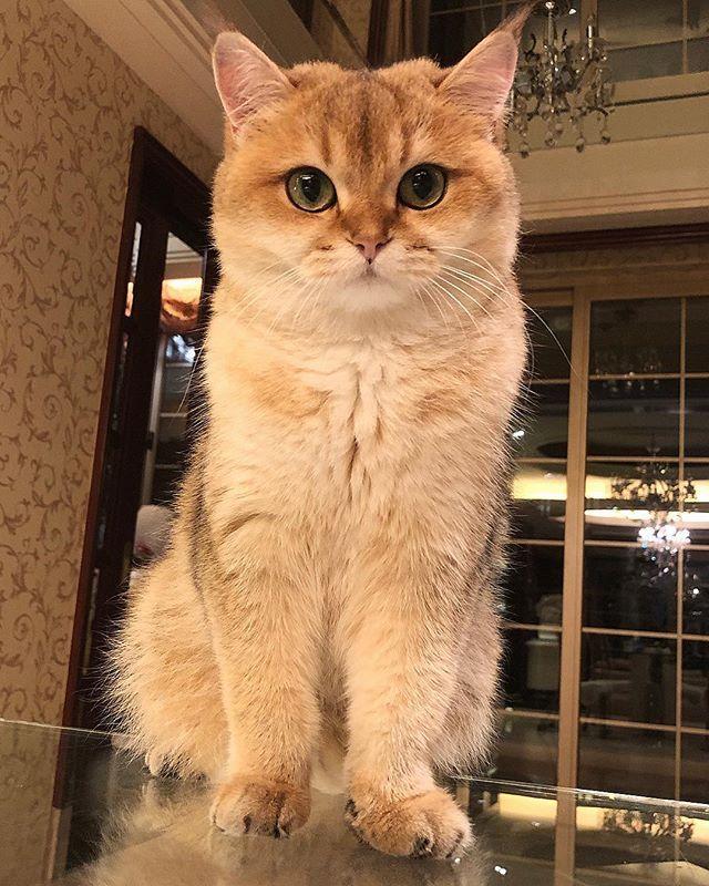 T o o O T i e 투리 Can you tell Tootie is looking slimmer