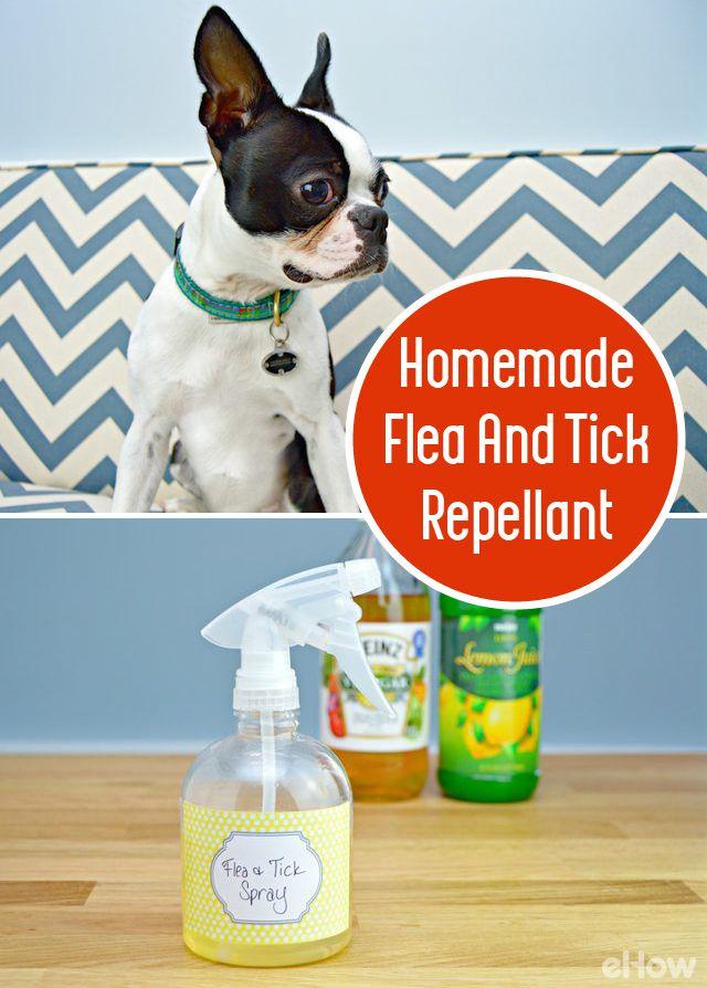 How To Make A Homemade Flea And Tick Repellent Dog Flea