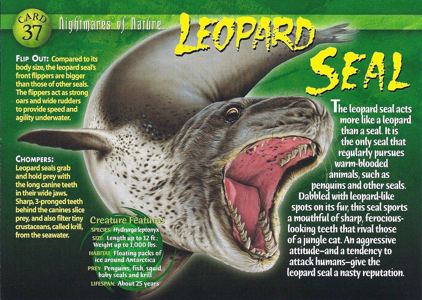 Leopard Seal fact sheet | LETHAL LEOPARD SEALS | Pinterest