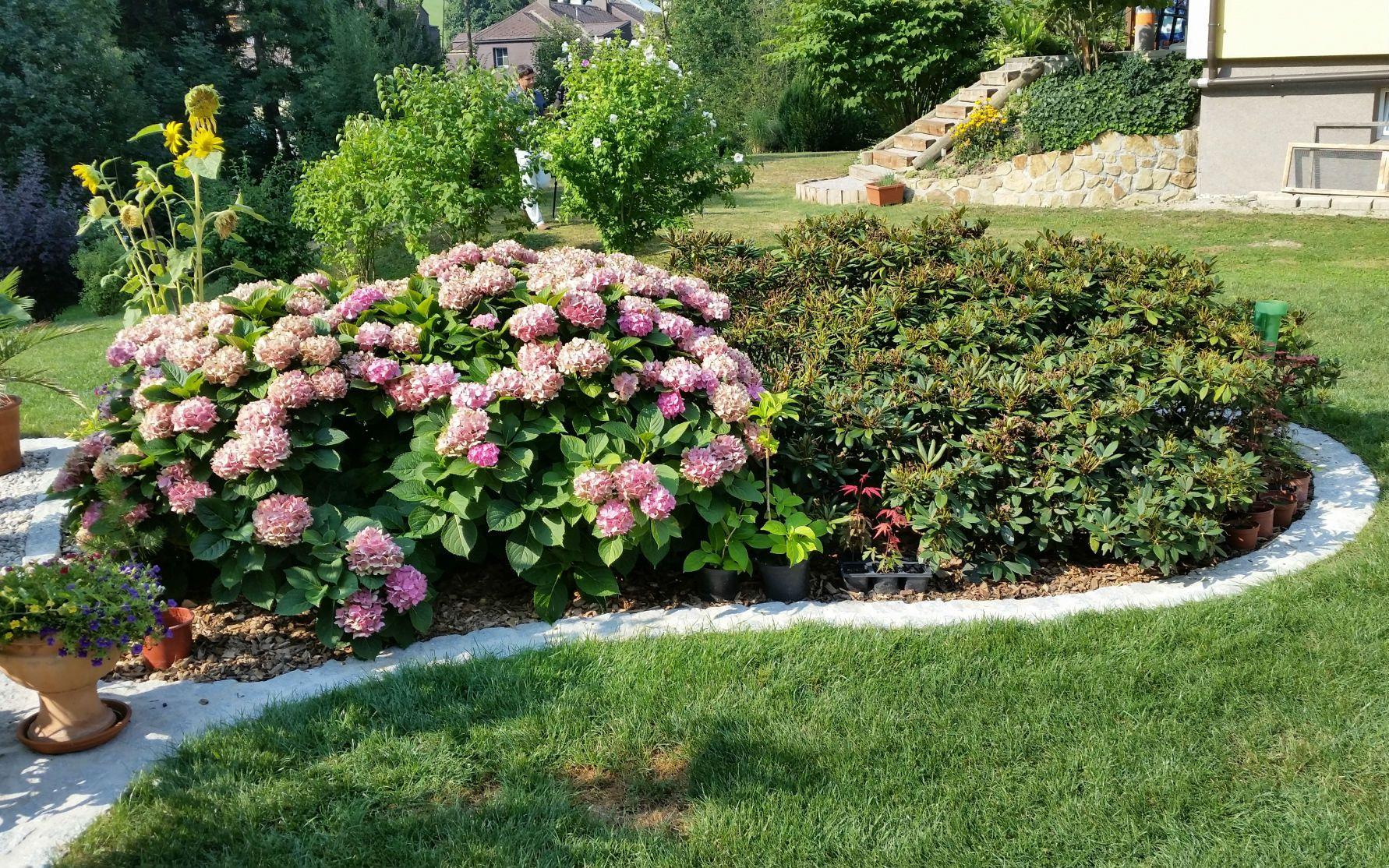 Moorbeet Mit Rhododendron Und Hortensie Garten Gartengestaltung Vorgarten