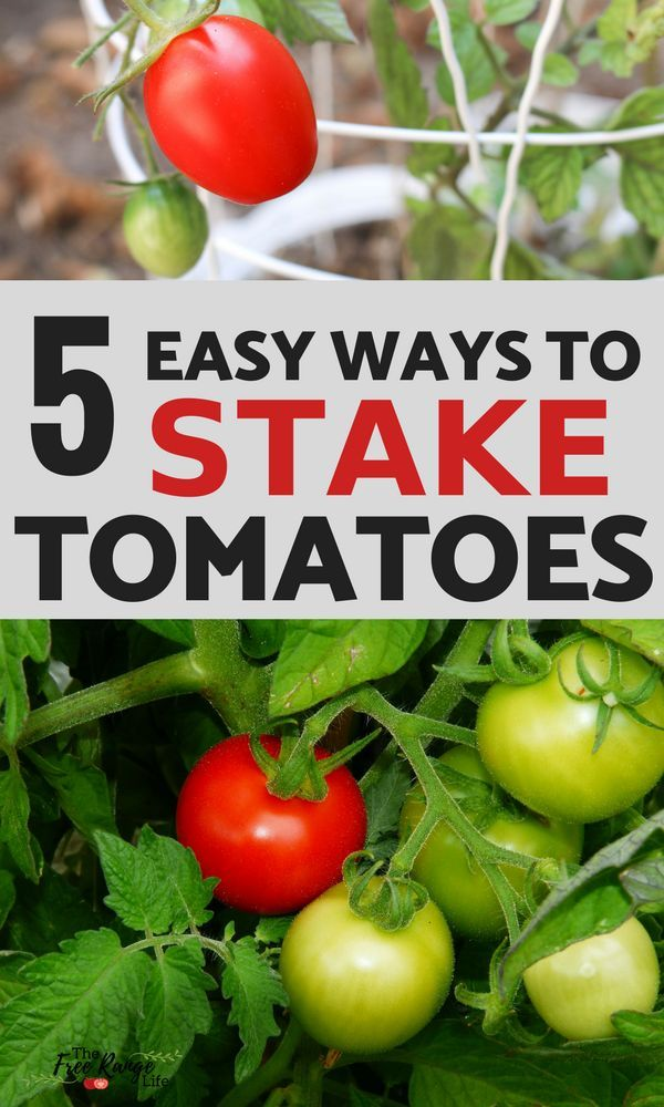 The 5 Best Ways To Stake Your Tomatoes Vegetable Garden 640 x 480