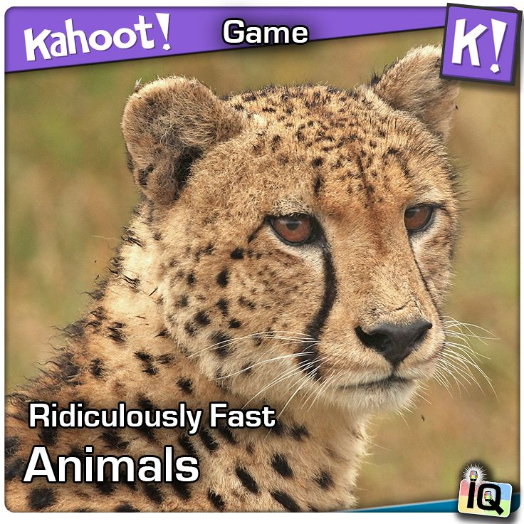 Play this #Kahoot called