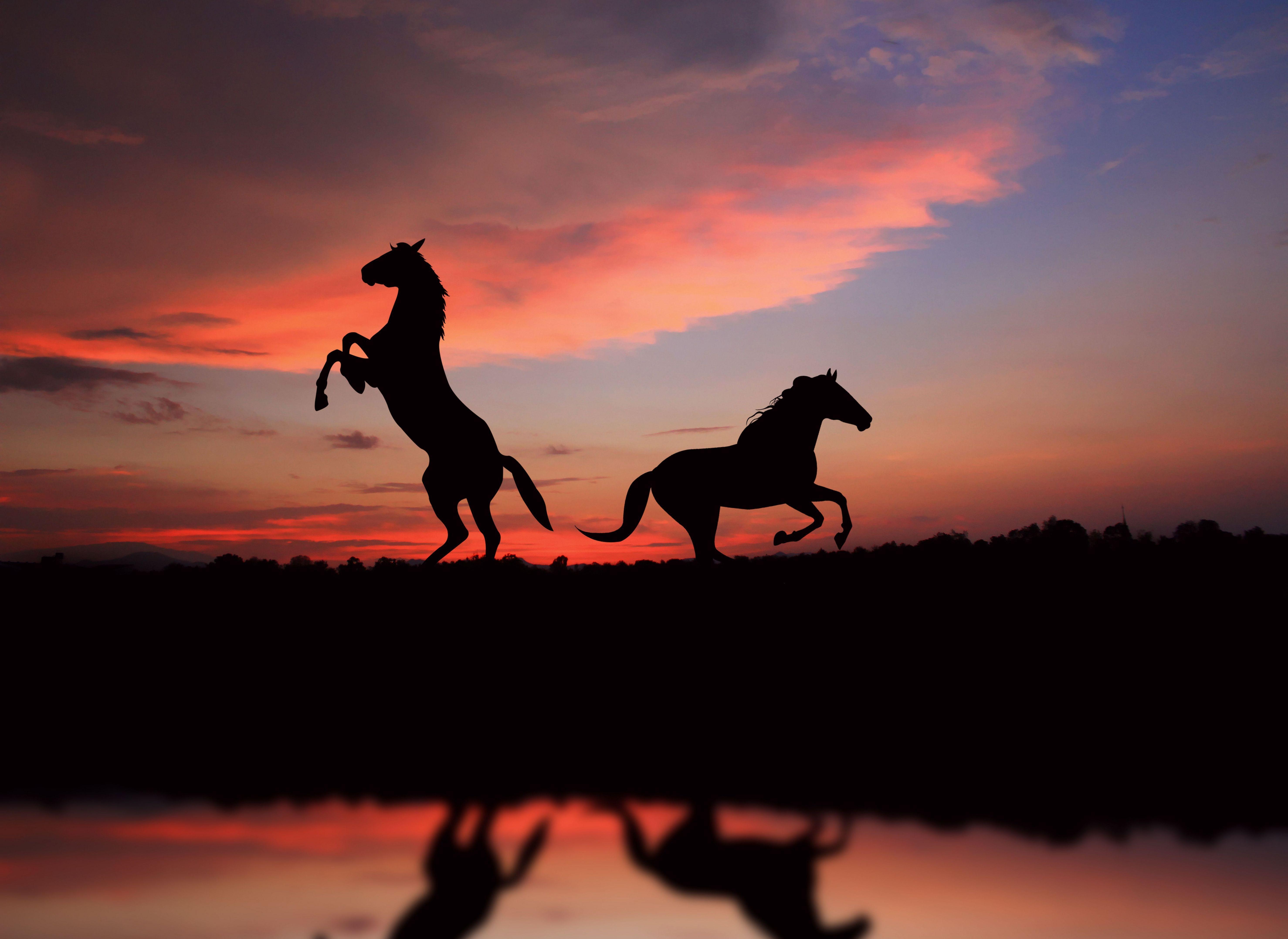 Wild Horses On The Beach At Sunset 01