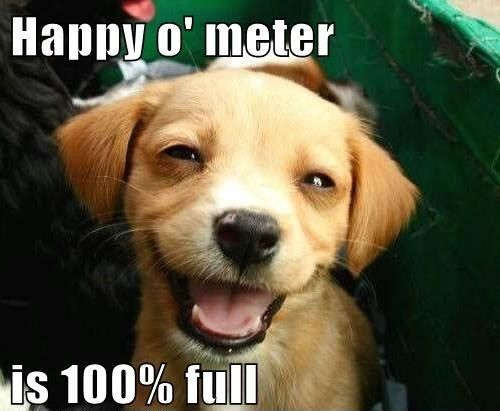 Thank you meme - Google Search | Very cute puppies ...