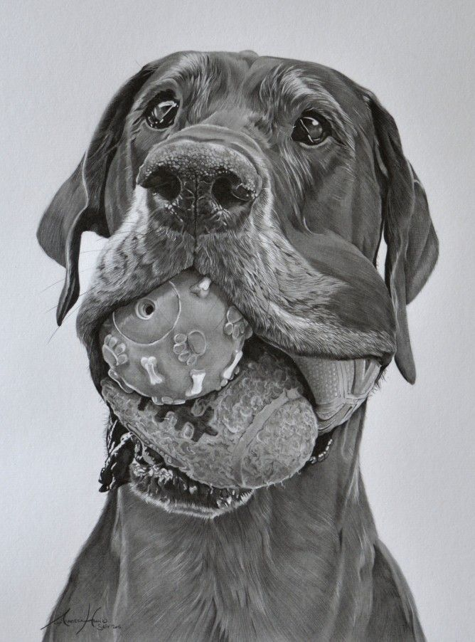 Noa Great Dane Amazing Dog Art In 2019 Animal Drawings Dog