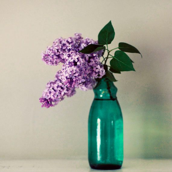Still Life Print Lilac 8x8 Photograph Simple By Birdandbloke 25 00 Flowers Photography Still Life Flowers Simple Flowers