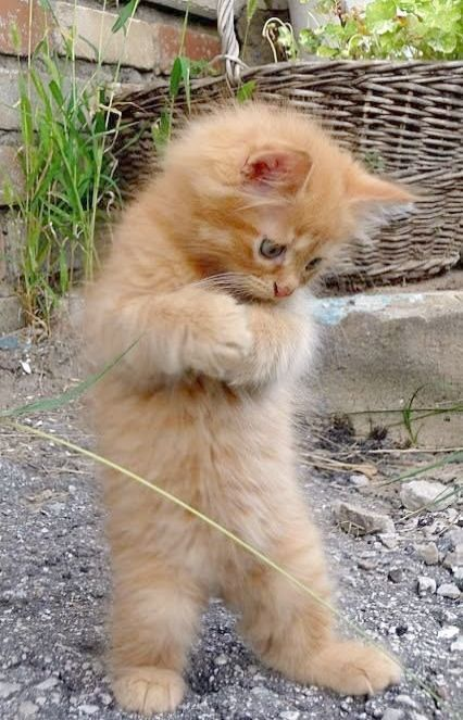 Get Some Kittens Meowing At Night Great Cute Baby Animals Cute Cats Cute Animals