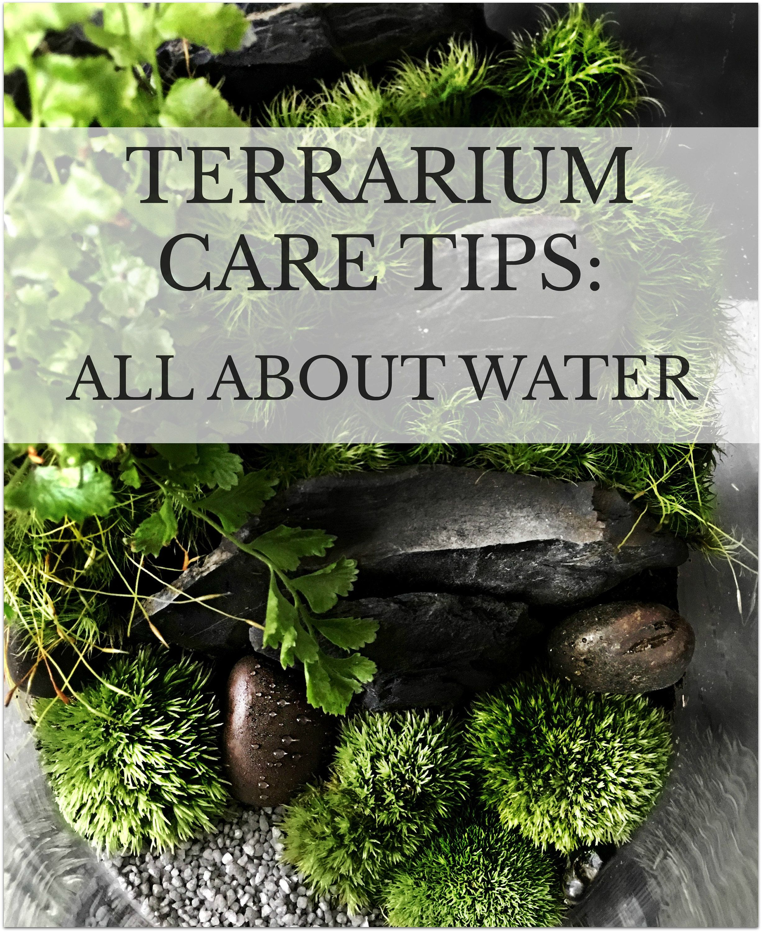 Care Tips Series All About Water Terrarium Pinterest
