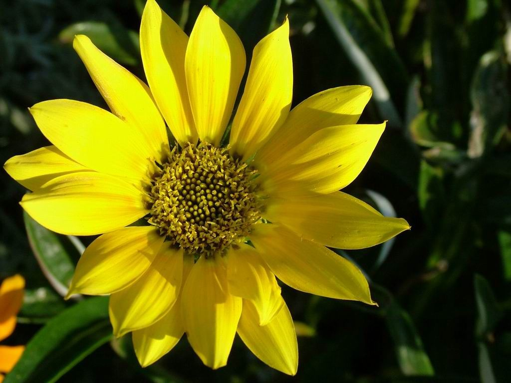 Yellow flower screensaver find beautiful home decor at tinyurl yellow flower screensaver find beautiful home decor at tinyurlsoelegant mightylinksfo