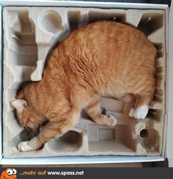 Originalverpackung Lustige Bilder auf Katzen