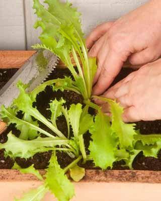 Huerto de pared: ¡cultiva tus verduras!