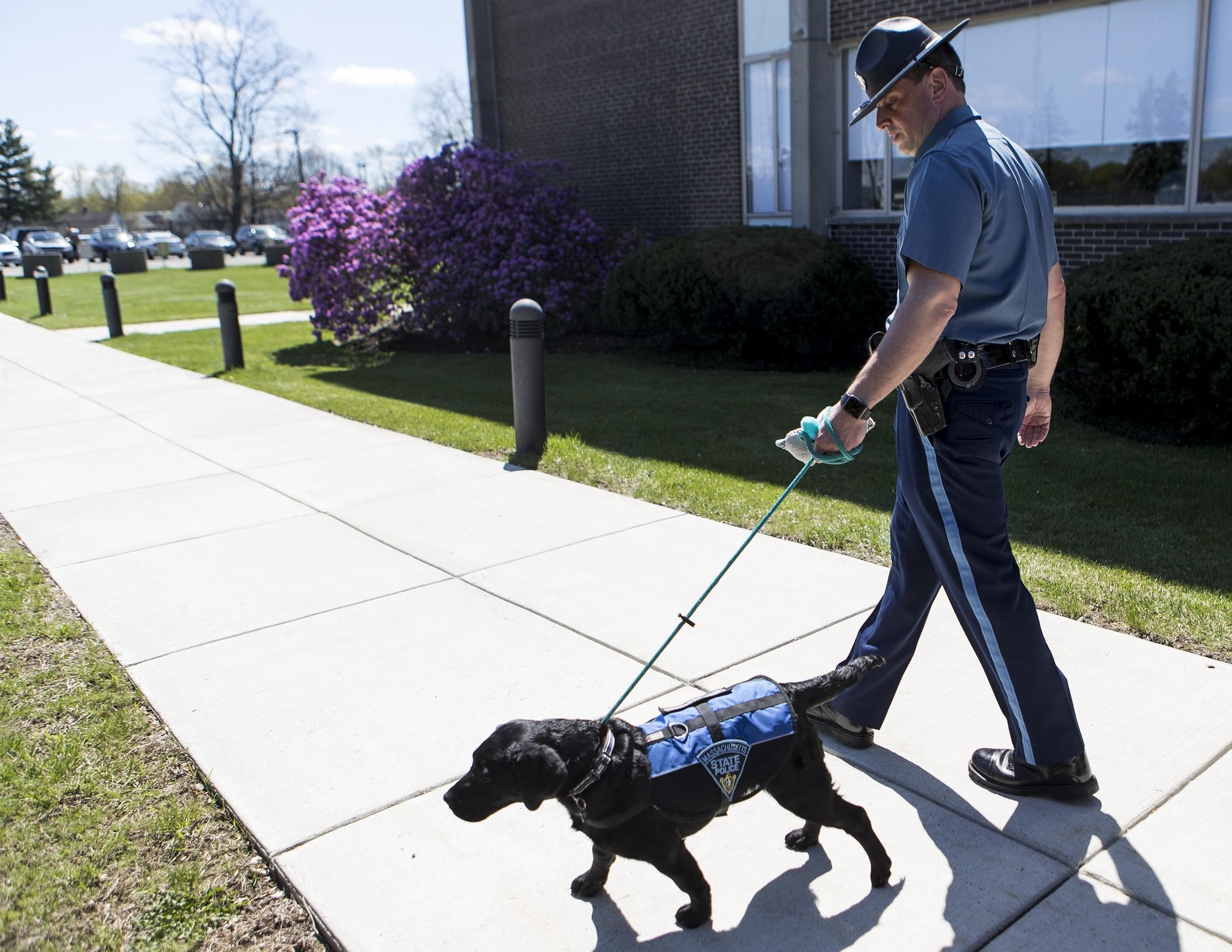 Massachusetts State Police Gets First Comfort Dog Luna State