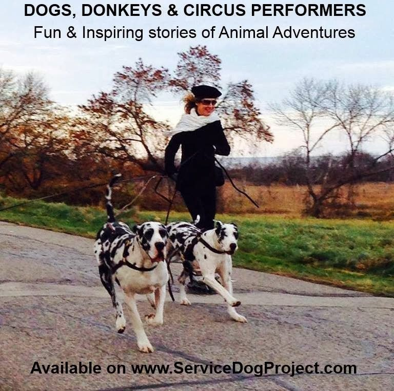 the Doggie Daily Doggy, Dog bag, Service dog project