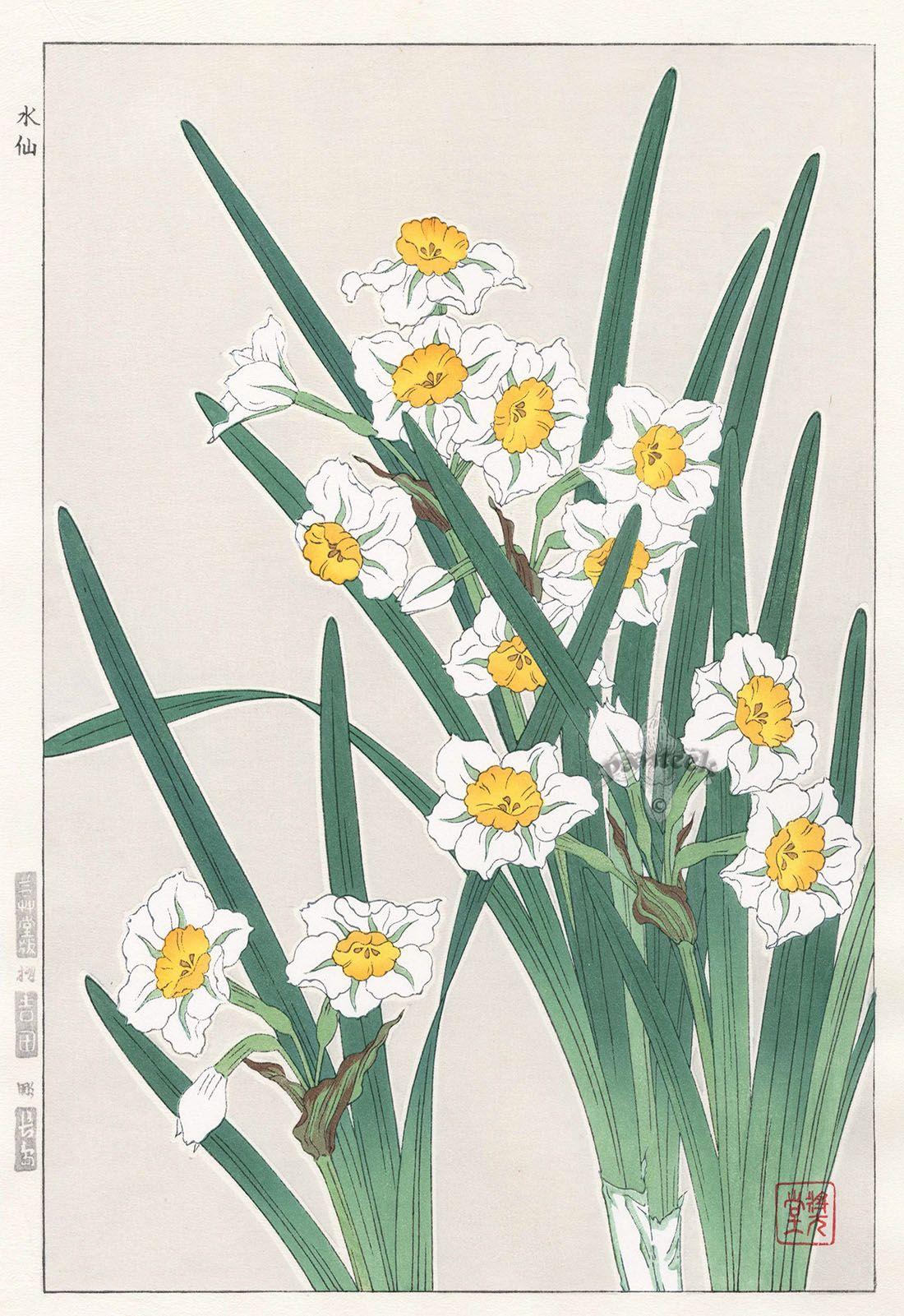 Narcissus From Shodo Kawarazaki Spring Flower Japanese Woodblock Prints Japanese Woodblock Printing Japanese Art Woodblock Print