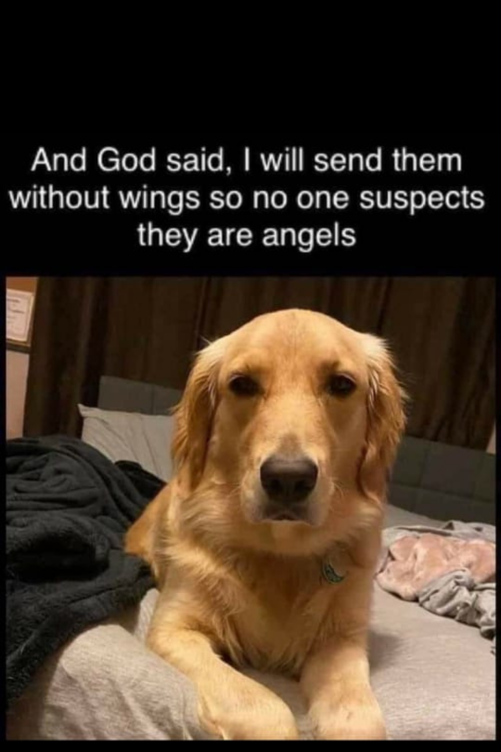 Angels Without Wings Funny Dog Memes Dog Memes Rescue Dogs