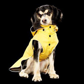 Rukka Stream Sadetakki Keltainen Dogs Pets Animals