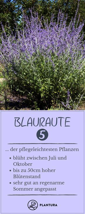 Photo of Easy-care plants: Our Top 10 – Plantura