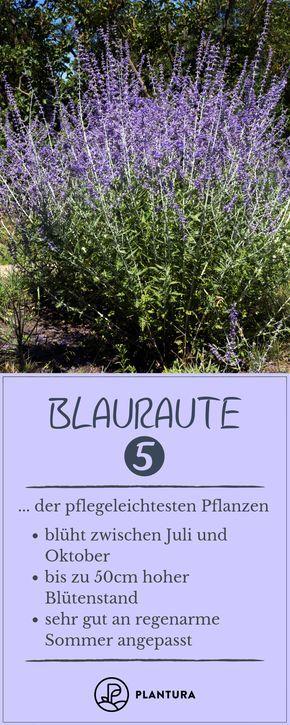 Pflegeleichte Pflanzen: Unsere Top 10 - Plantura