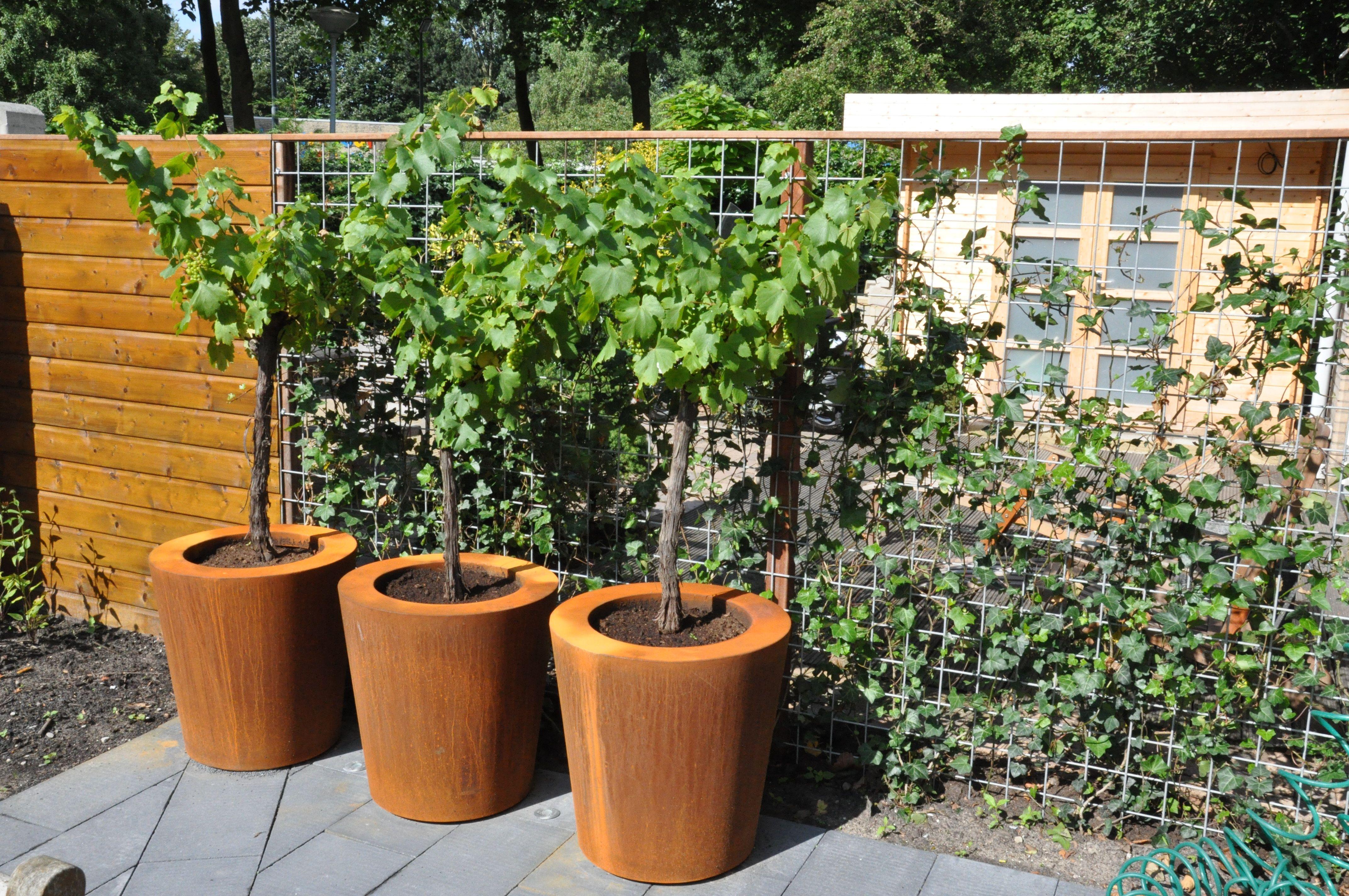 ADEZZ planters & more fotografia