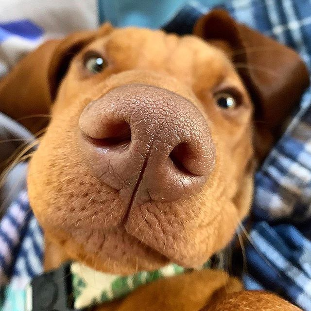 click to see you more   Puppies and kitties, Animal noses ...