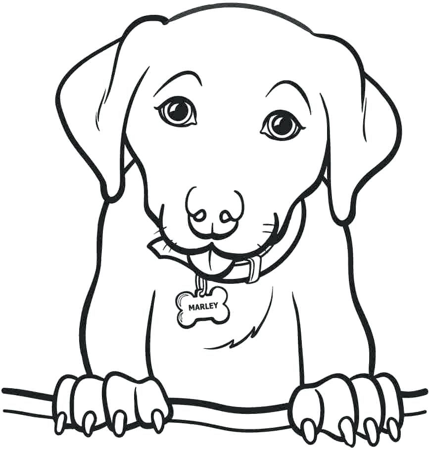 Golden Retriever Coloring Pages Dog Coloring Page Cow Coloring