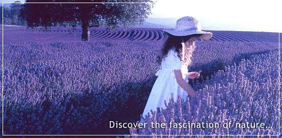 This is Bridestowe Estate Lavender Farm in Tasmania. Loved loved ...