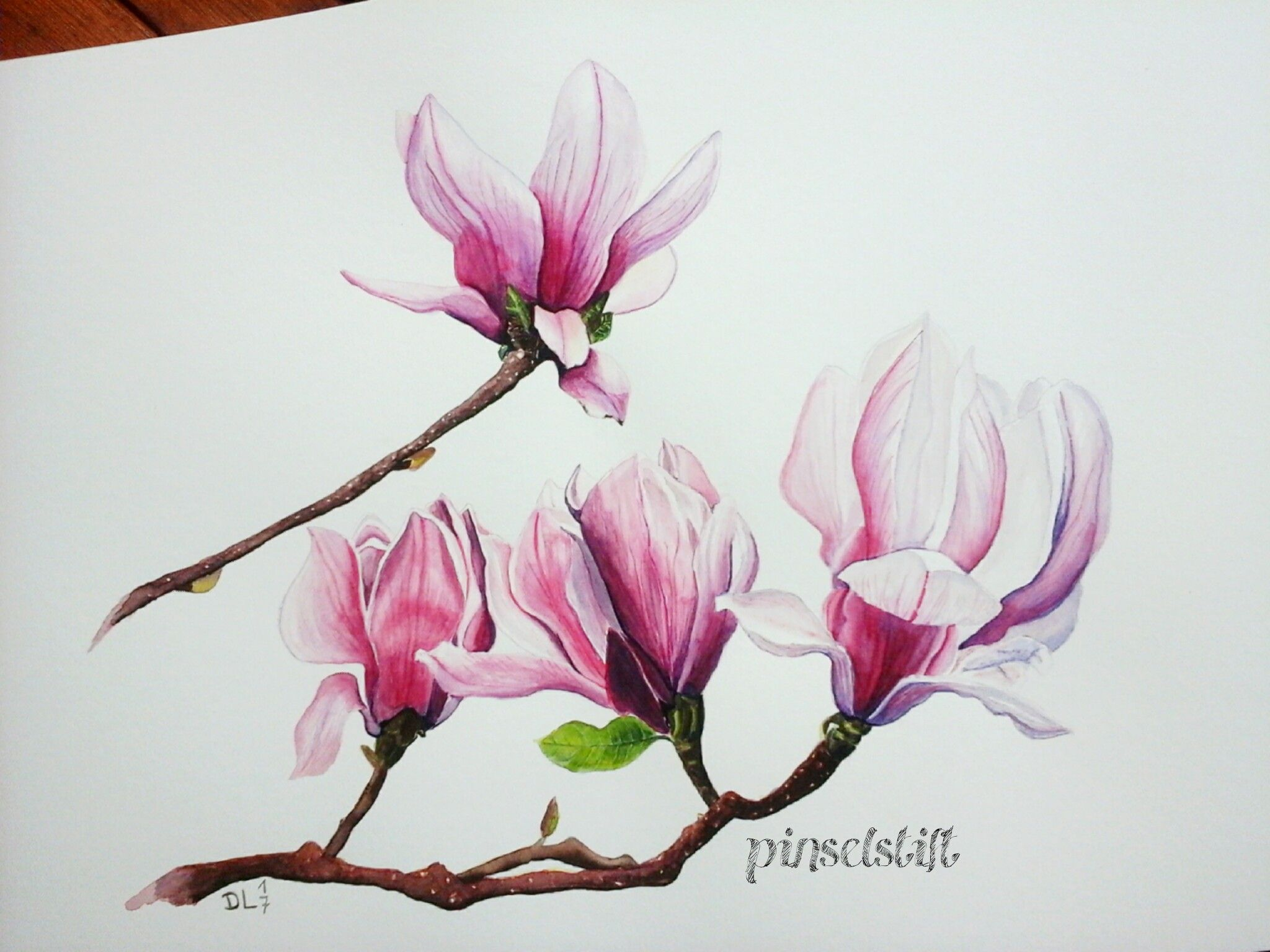 magnolien aquarell flowers in watercolour. Black Bedroom Furniture Sets. Home Design Ideas