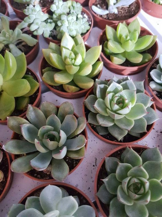 Sukkulenten Mix 55 cm Topf / / plantas suculentas por AnaberJewelry