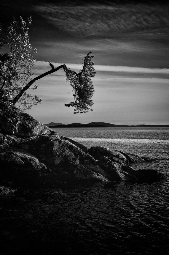 Items similar to tree on cliff water black and white scene puget sound pacific northwest landscape fine art photo print home decor scende la notte on etsy