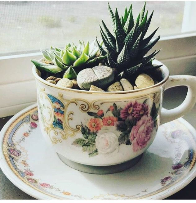 Plants in a teacup