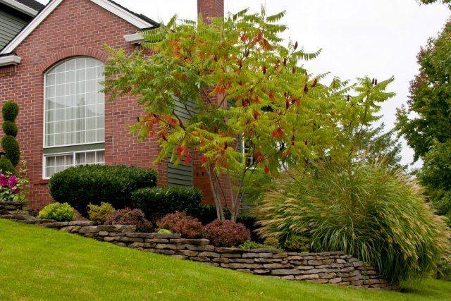 idee baum vorgarten essigbaum ziergras chinaschilf | im grünen, Garten Ideen
