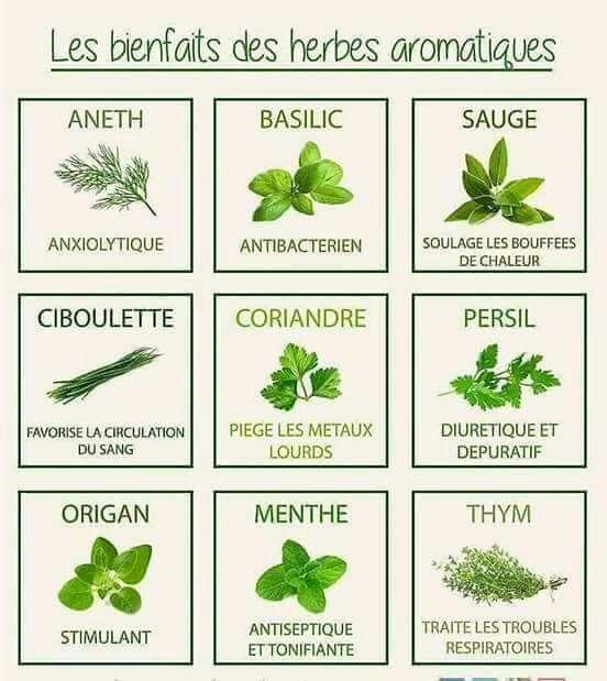 Pas De Cuisine Sans Herbes Aromatiques Plantes Aromatiques