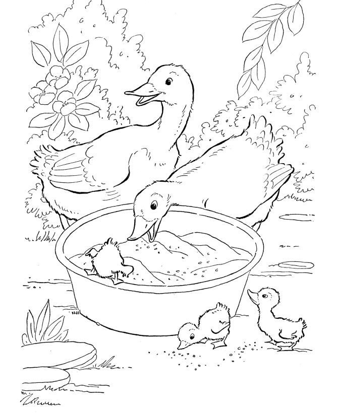 Farm Animal Coloring Page Free Printable Duck Pages Featuring Ducks Eating Grain Sheets